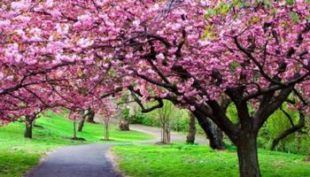 Blooming Blossoms – Plant a Tree 2016