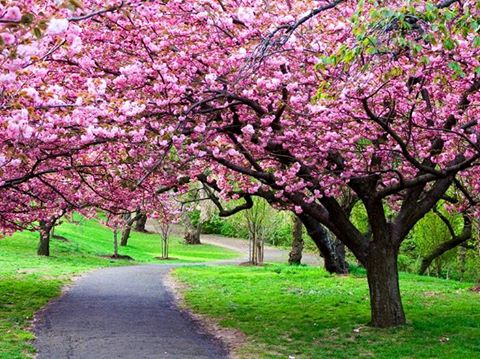 You are currently viewing Blooming Blossoms – Plant a Tree 2016